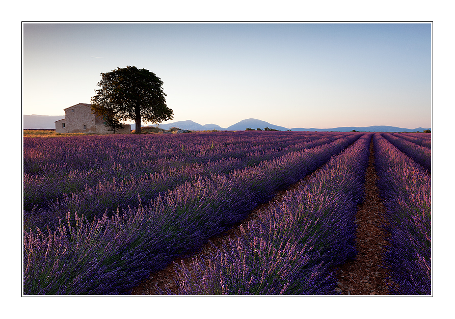 The house of lavender fields