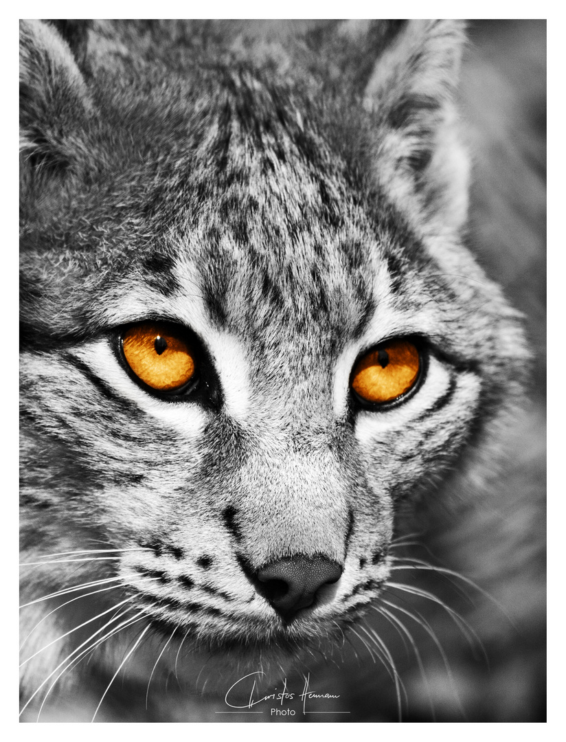 The hunter's eyes