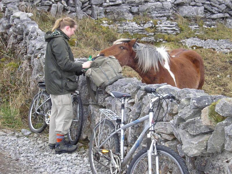 The Inishmore Horse