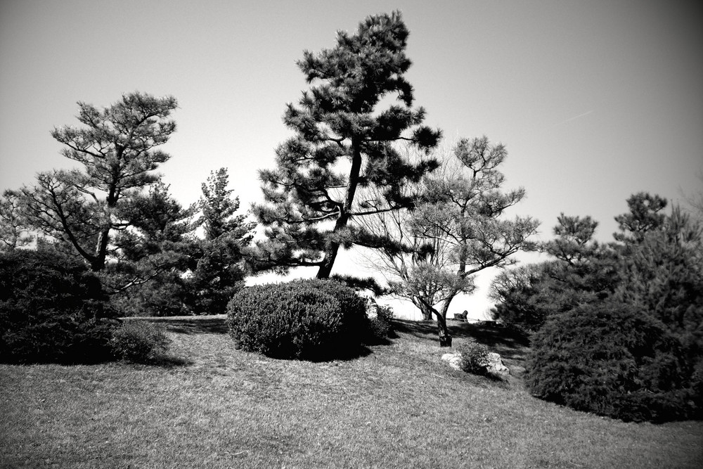 The Japanese Hill