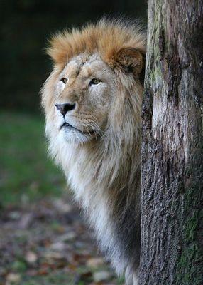 the king is awake