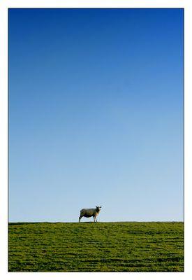 The Lamb lies down on ...