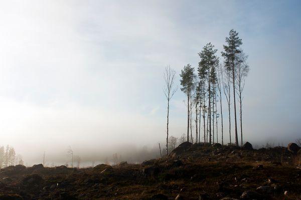 The last trees