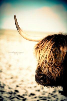 - the last unicorn -