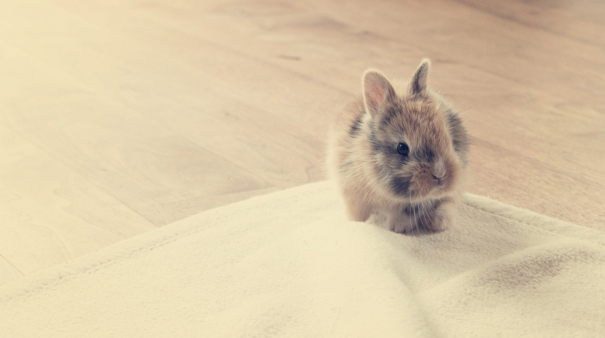 The little Easterbunny