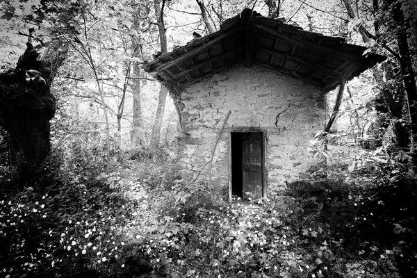 the little house in the forest -2