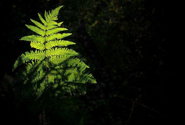 The Living Forest (126) : Bracken
