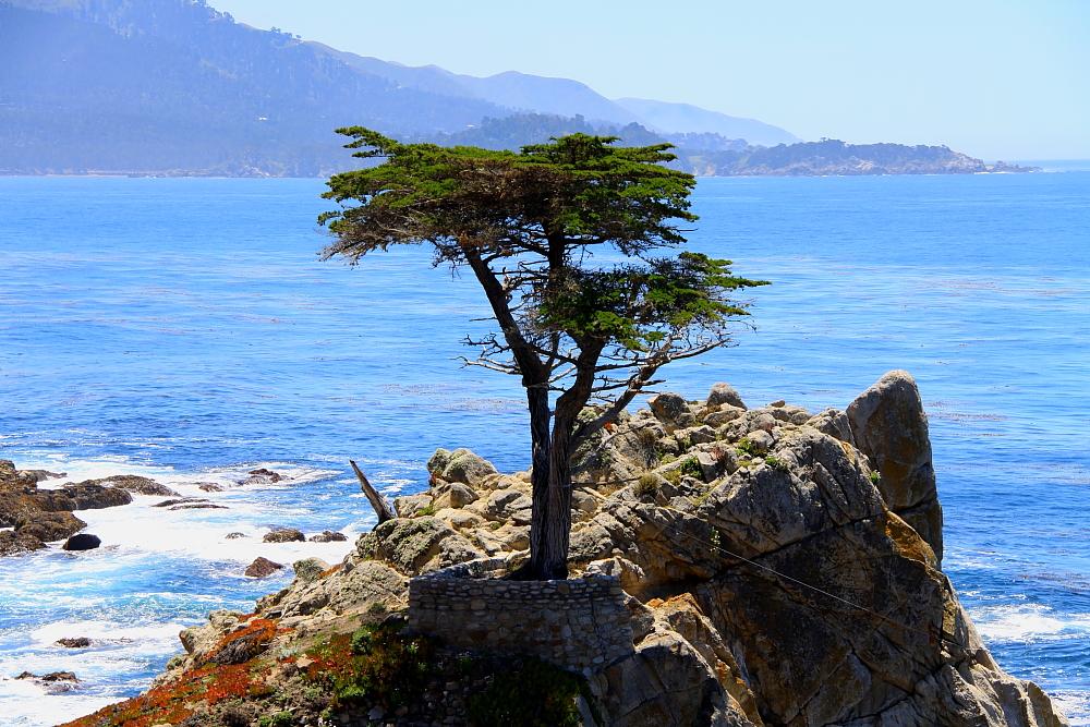 The Lone Cypress Tree- Carmel, CA- 17 Mile Drive