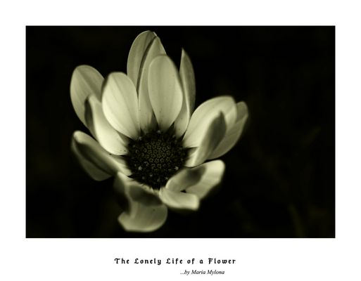 The Lonely Life of a Flower