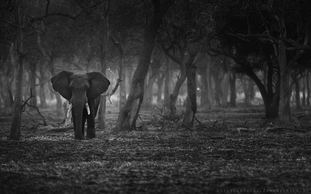 the lonely tusker