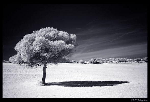 The lonesome tree II