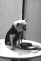 The lonley dog