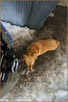 The lonley dog ( Hundeblick )
