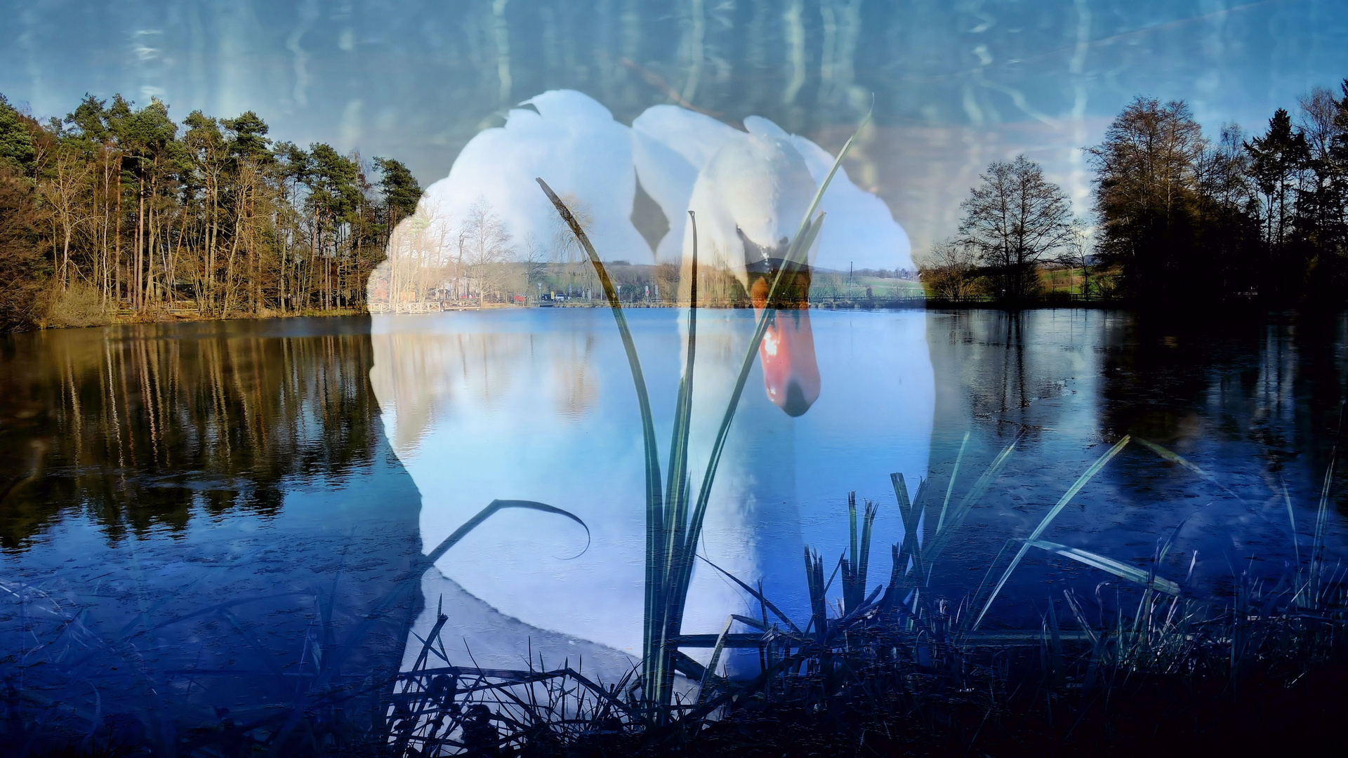 The Magic of the Swan´s..............