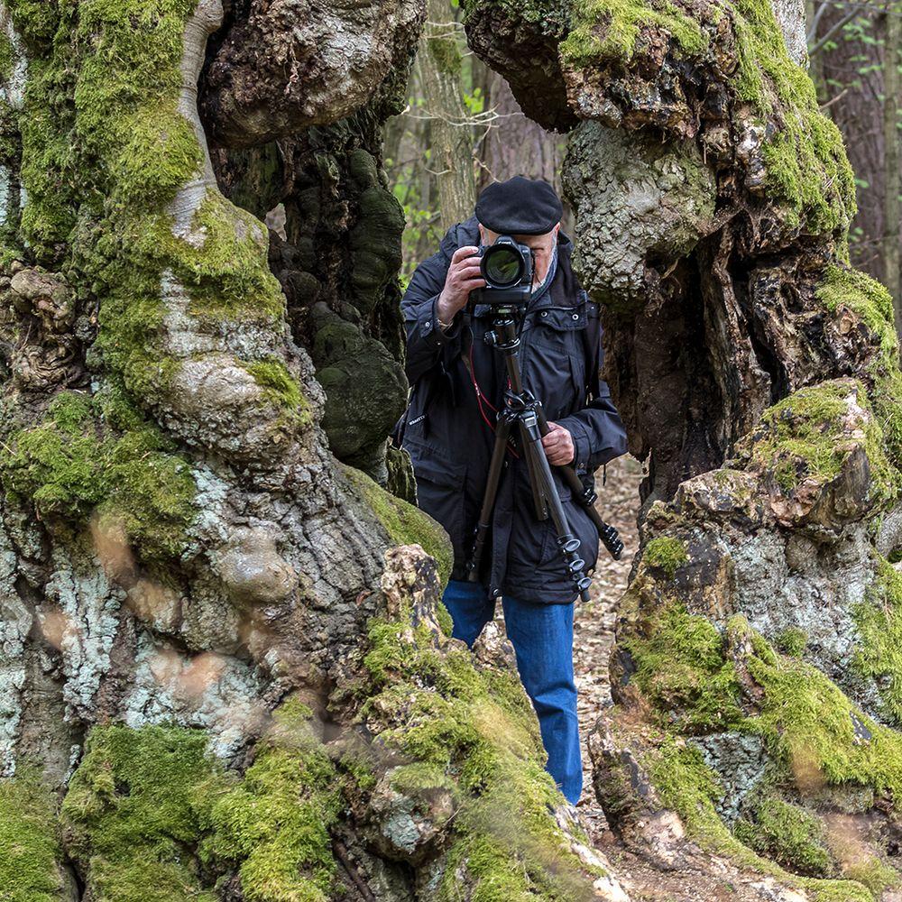 THE MAKING OF: Hutebuchen bei Bad Wildungen