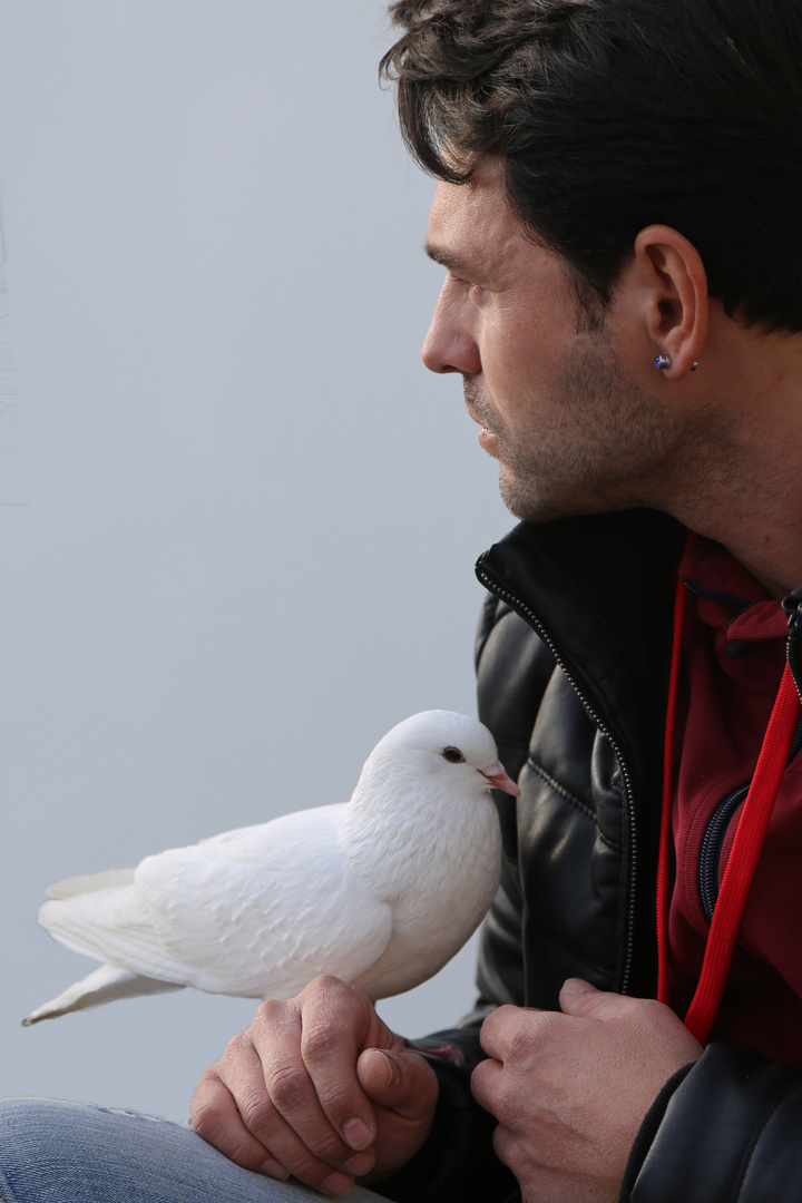 the man and the pigeon