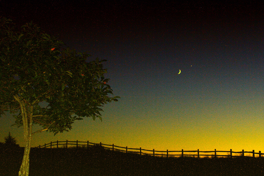 the meeting of moon & venus by the apple tree