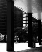 THE MIES PHENOMENON