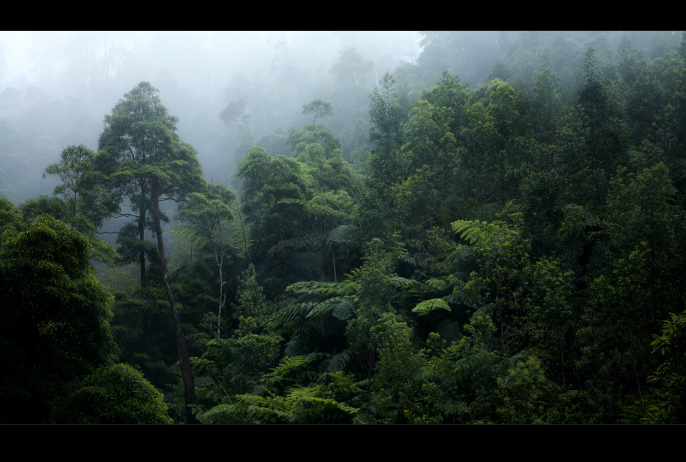 The Mood of the Rainforest