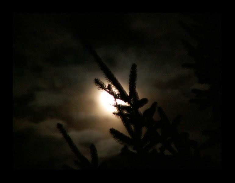 The Moon's shining...