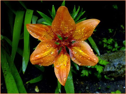 The Most Beautiful Flower Of My Garden