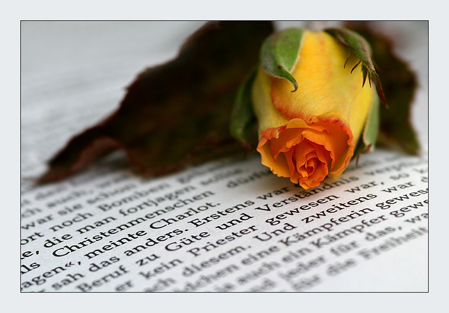 The most beautiful things: books and roses