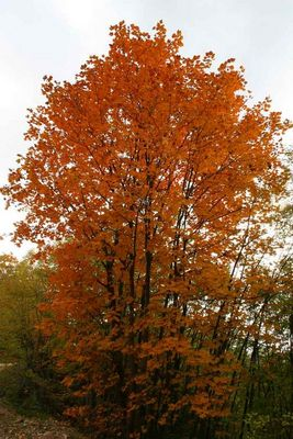 the natural colors of autumn