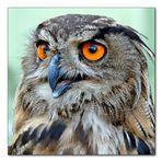 The old owl II