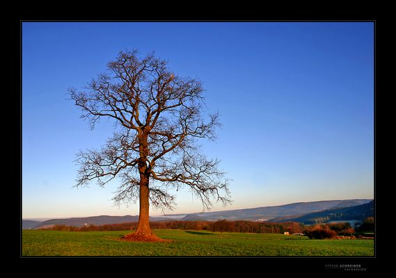 [ THE OLD TREE ... ]