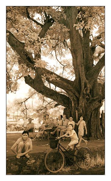 The Old Village Tree