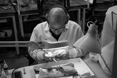 The Paleontologist at Work