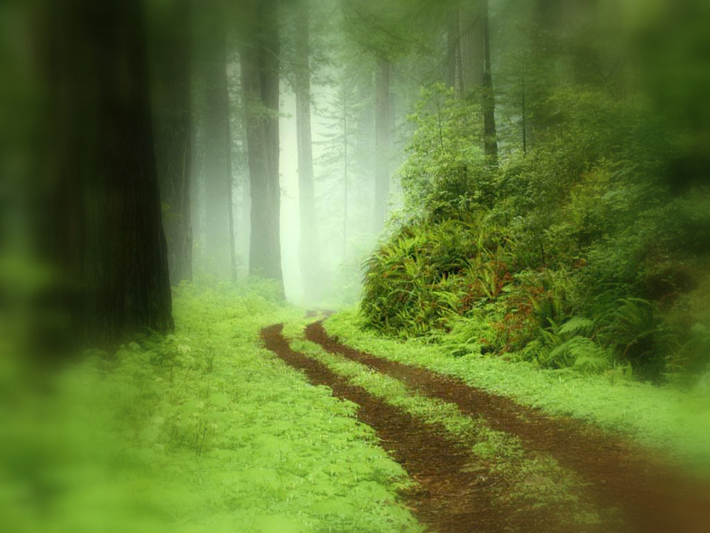 the path..