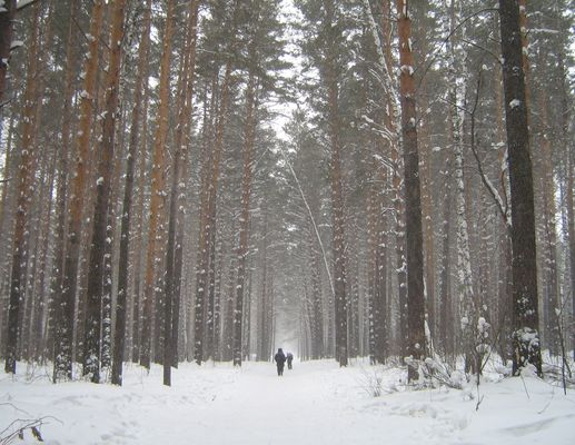 """""""The path is again engaged in my forest..."""""""