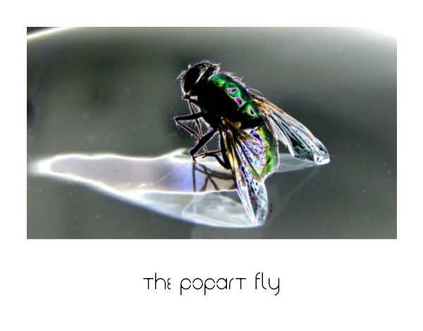 The PopArt Fly