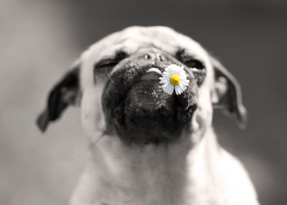 The Power of Flower