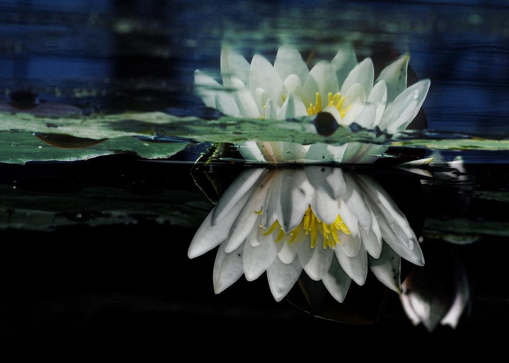The Queen of silent Waters