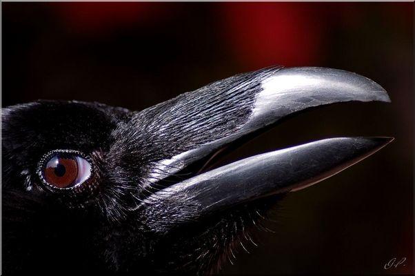 The Raven III