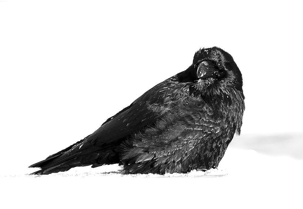 the raven smiles