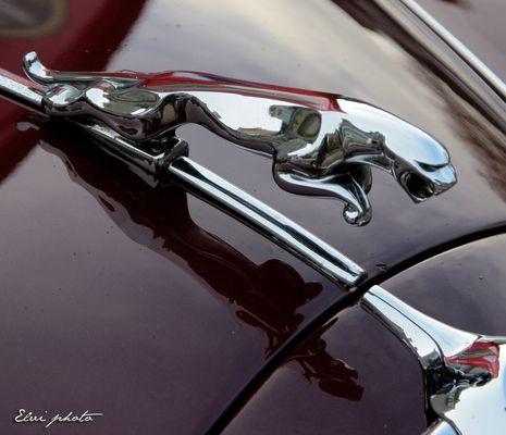 The red Jaguar