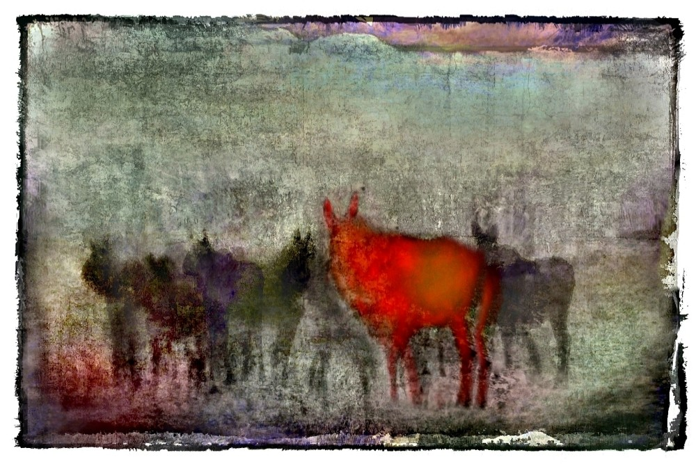 the red moose by henox