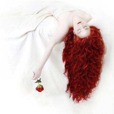 [ the red rose .. ]