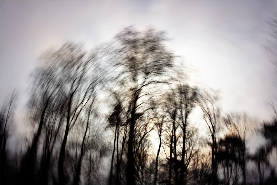 -- the secret forest I --