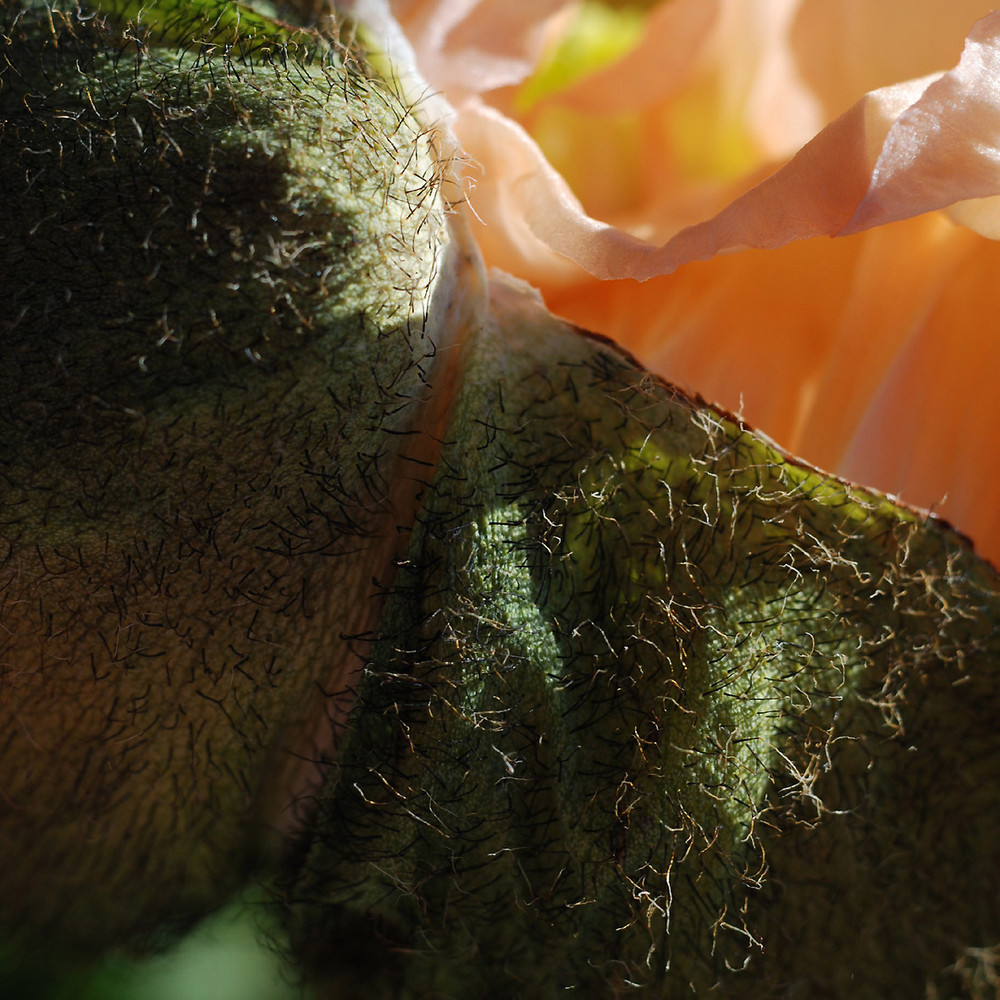 The secret life of plants 1