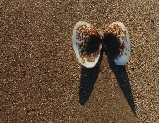 THE SHELL IN THE SAND