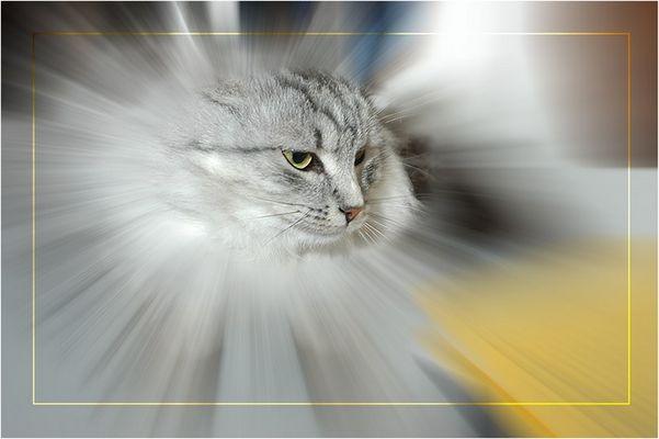 The Silvercat ...