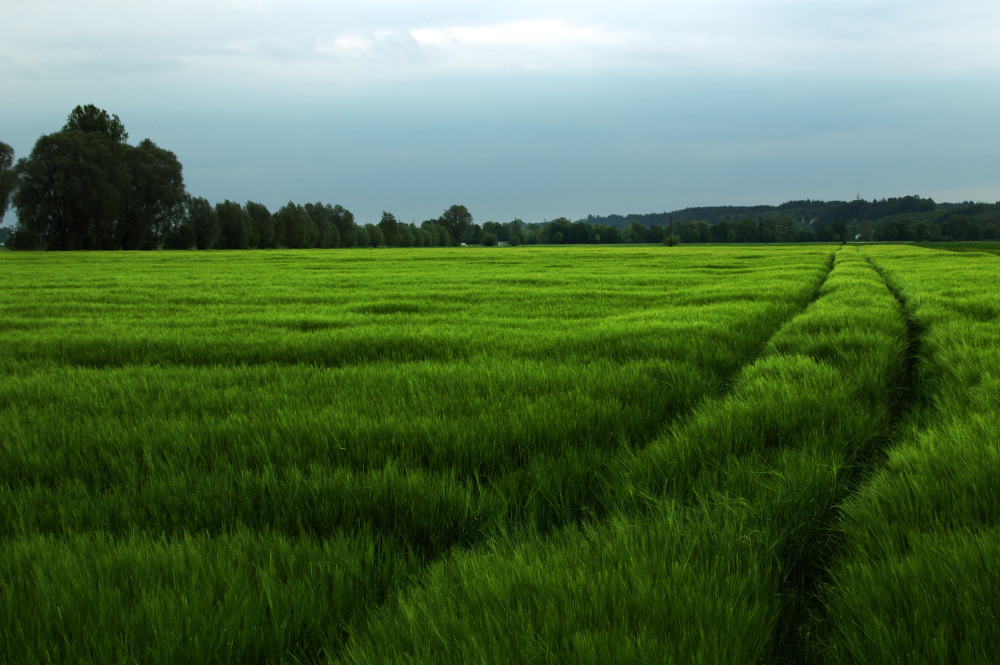 the simplicity of a green field