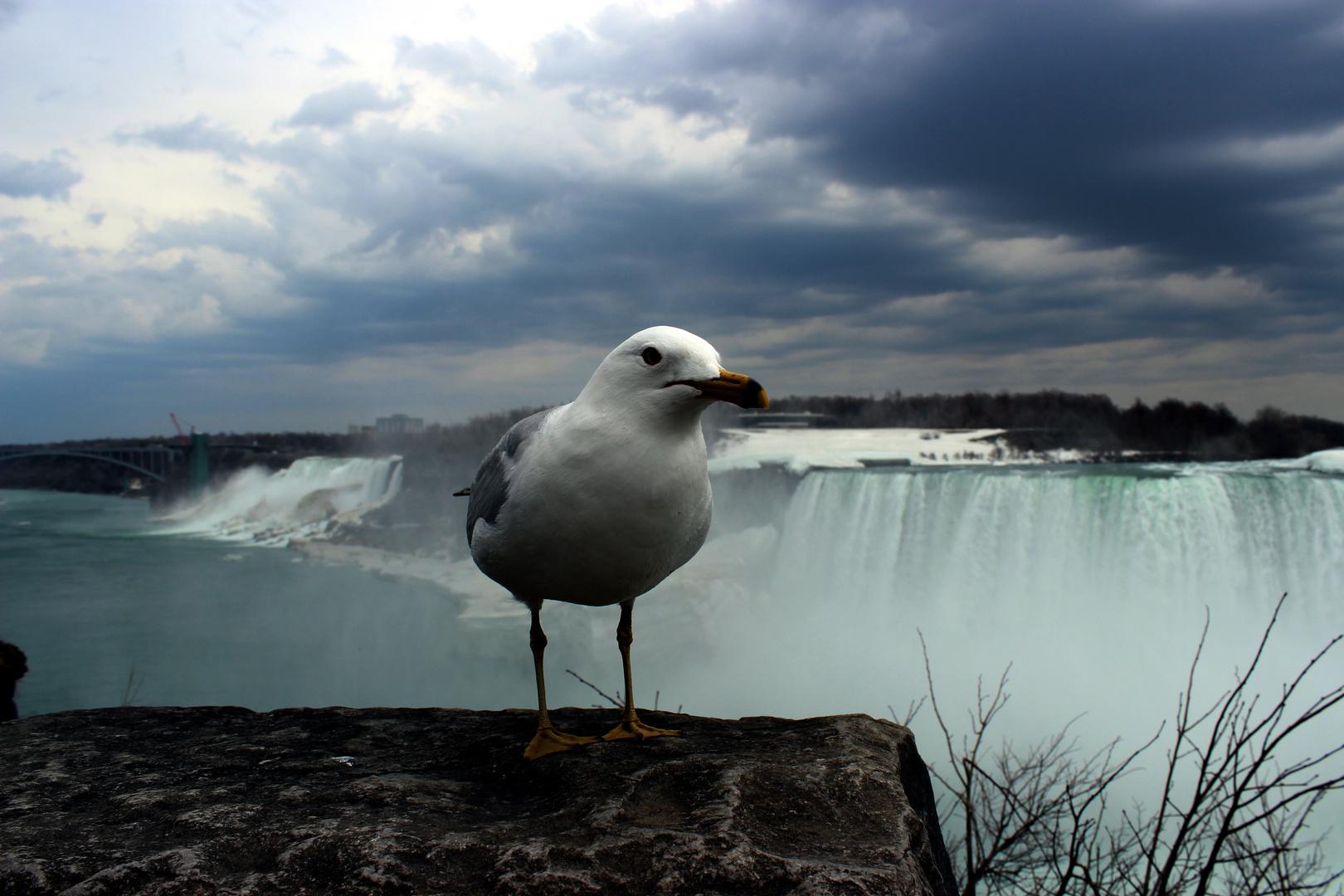 THE STAR an den Niagara Fällen
