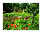 ~ The Summer Garden ~