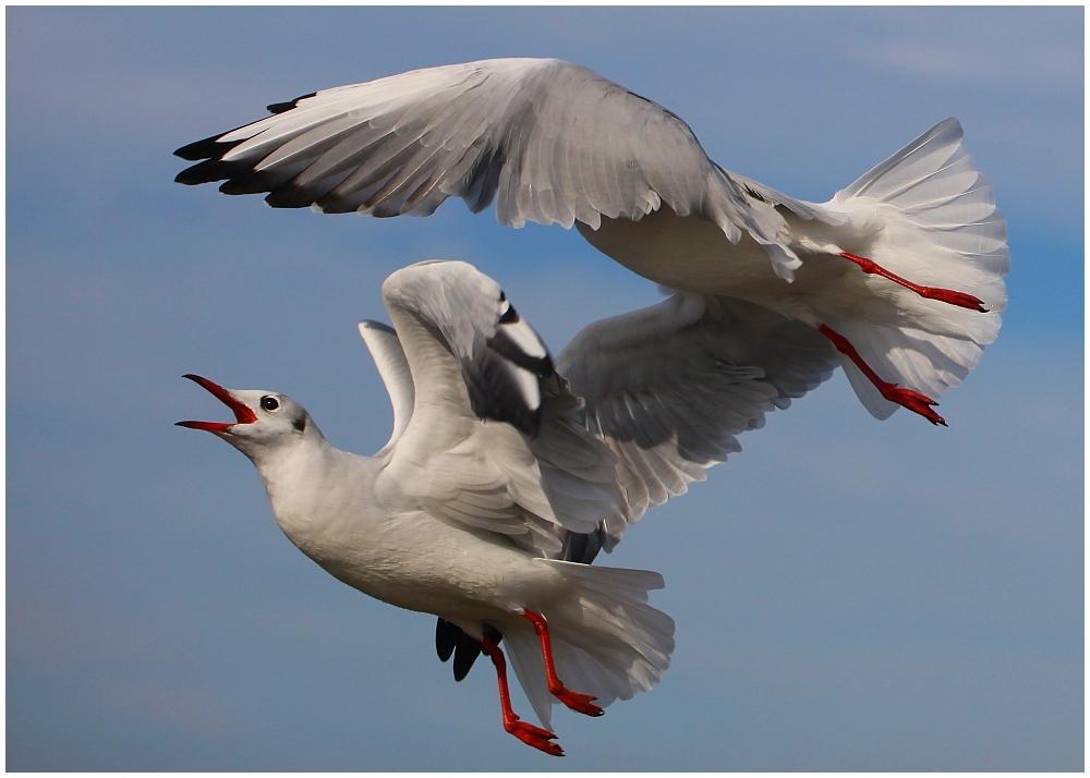 ... the sunday seagulls ... / ... les mouettes du dimanche ...