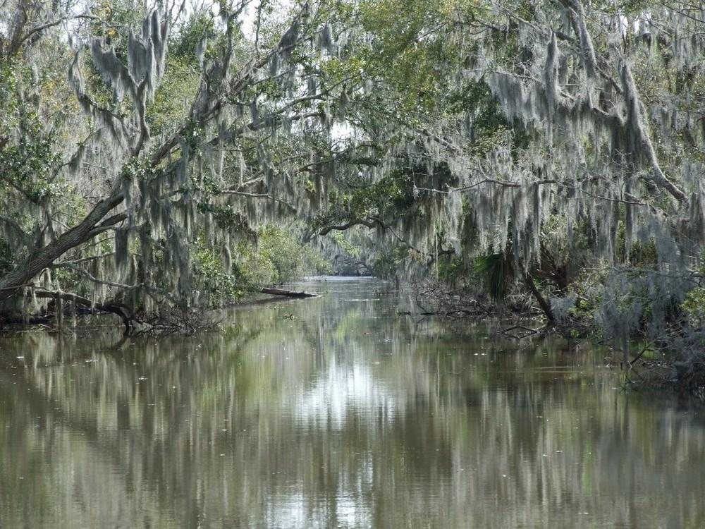The Swamps, NO, LA, USA